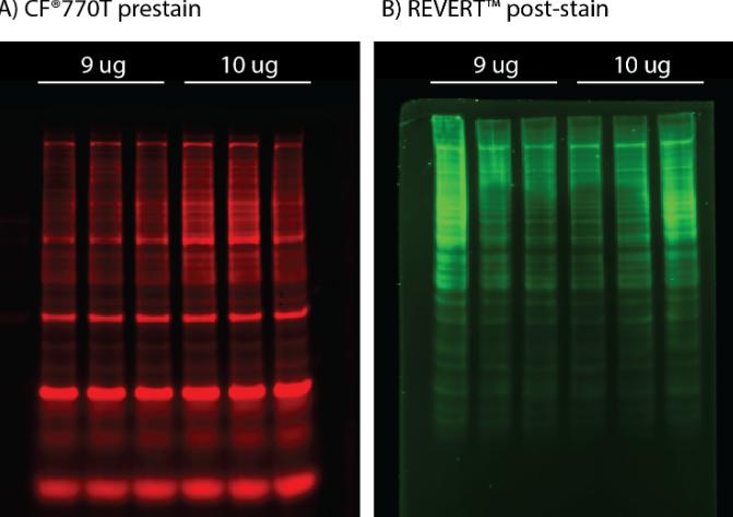 La tua guida per le macchie di proteine